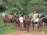 Marshalling the horses